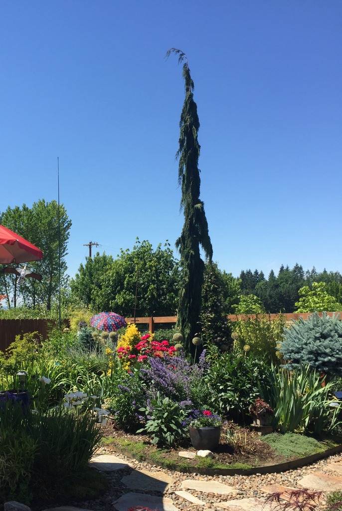 Garden Fair 6