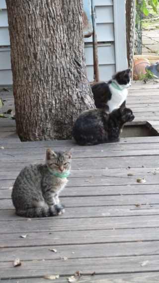 Visted brother Harry and wife Becky and got to know some of the cats