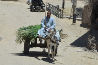 The ubiquitous donkey cart