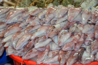 Squid, Fish Market, Dubai