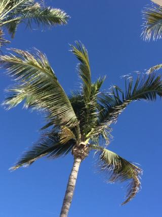 20181004 Palm
